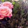 Rosor och rosmarin